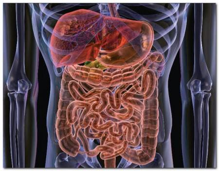 Дисбактериоз кишечника после антибиотиков