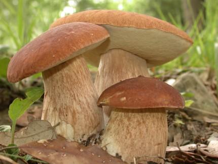 Можно ли кушать грибы при панкреатите
