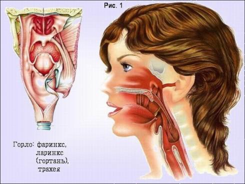 Рак горла 4 стадии прогноз