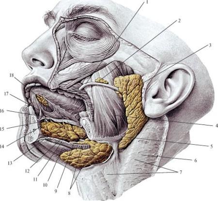 Плеоморфная аденома околоушной слюнной железы