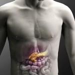 Размер поджелудочной железы взрослого человека