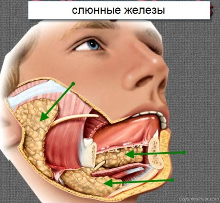 Опухоль слюнной железы симптомы