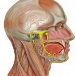 Воспаление слюнных желез: симптомы