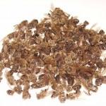 Пчелиный подмор при лечении язвы желудка