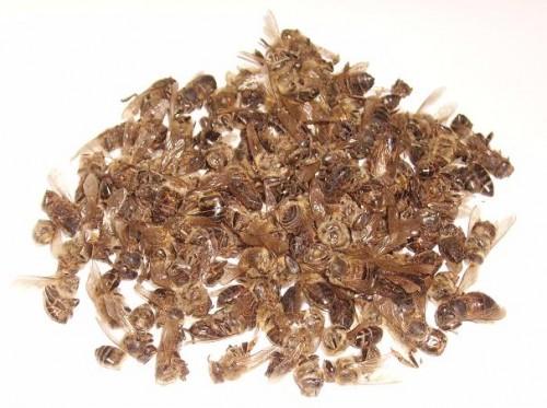 пчелиный подмор при язве желудка
