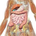 Хронический гастродуоденит: симптомы и лечение